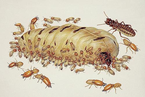 鄂州白蚁防治灭老鼠蟑螂消毒杀虫服务