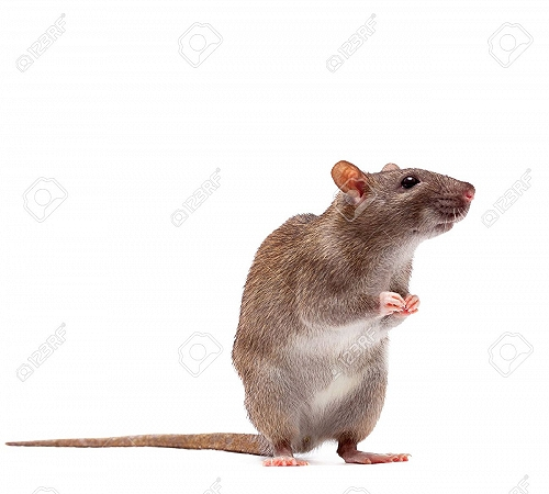 大冶灭跳蚤灭老鼠灭蟑螂灭白蚁消杀公司